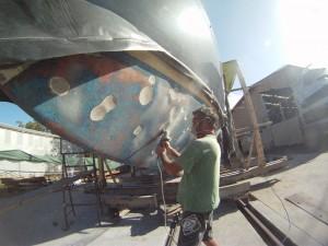 migaloo 2 whale