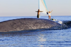 blue whale diving under kayaks alltime transparentsea2 voyage