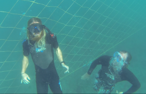 swimming under shark nets